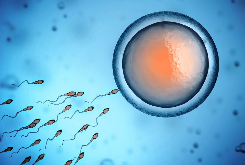 Super Swimmers: How Sperm Production Works